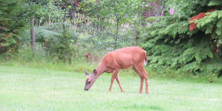 3632 obrien road.deer